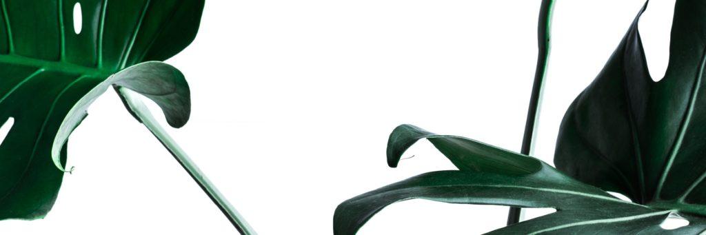 Botenical Style - grün und schön