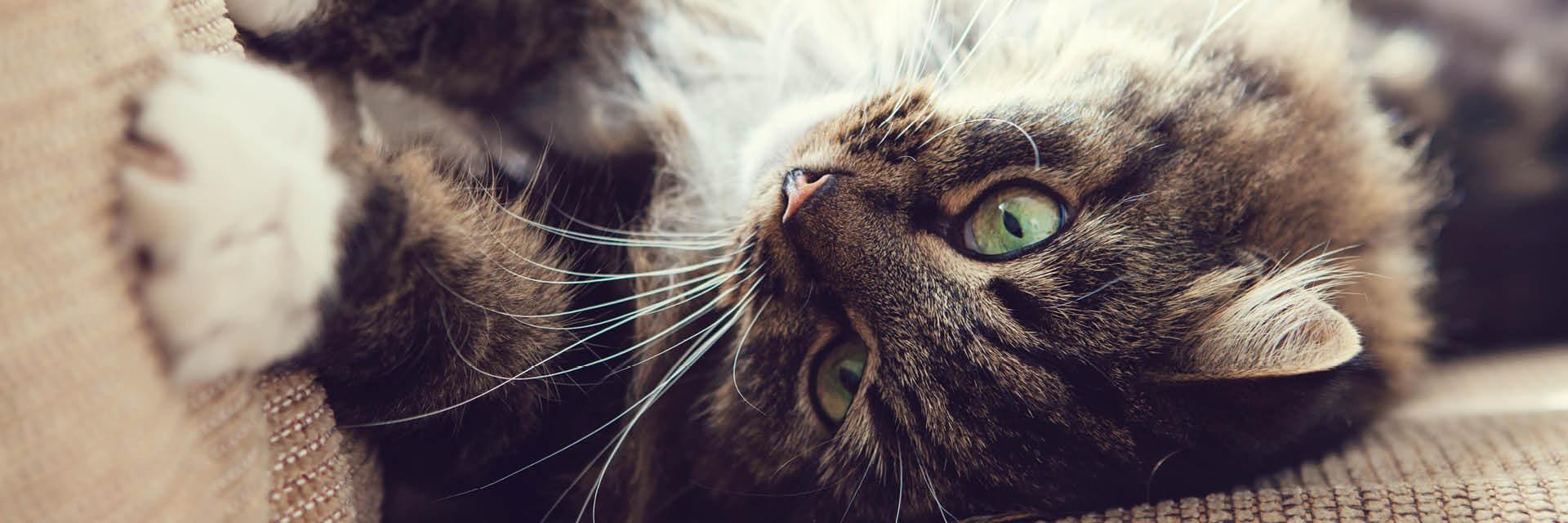 Sofas Und Katzen Tipps Für Geeignete Sofa Stoffe Möbelhaus Kuboth