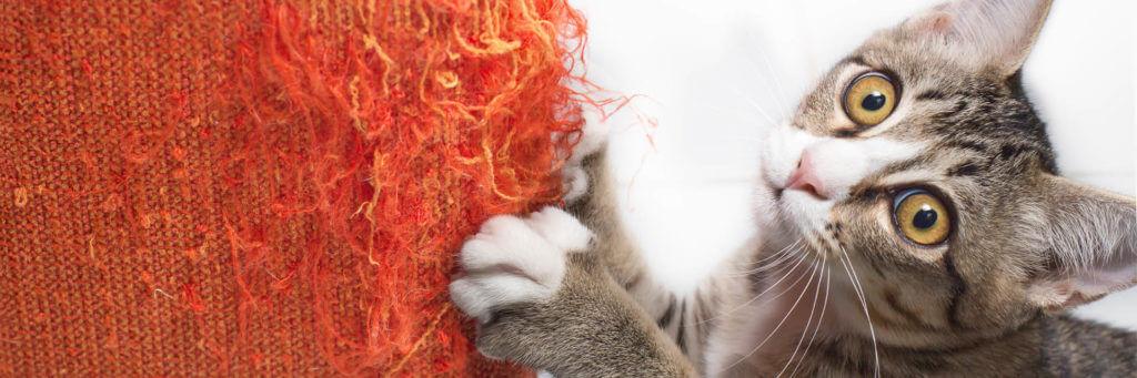 Sofas und Katzen - Tipps für geeignete Sofa-Stoffe